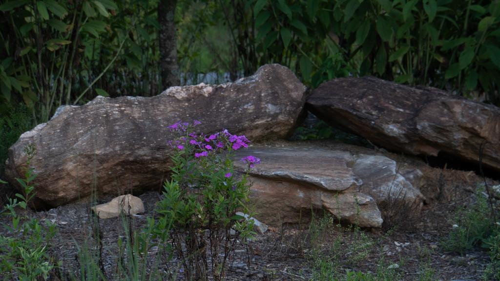 Rock Garden by randystreat
