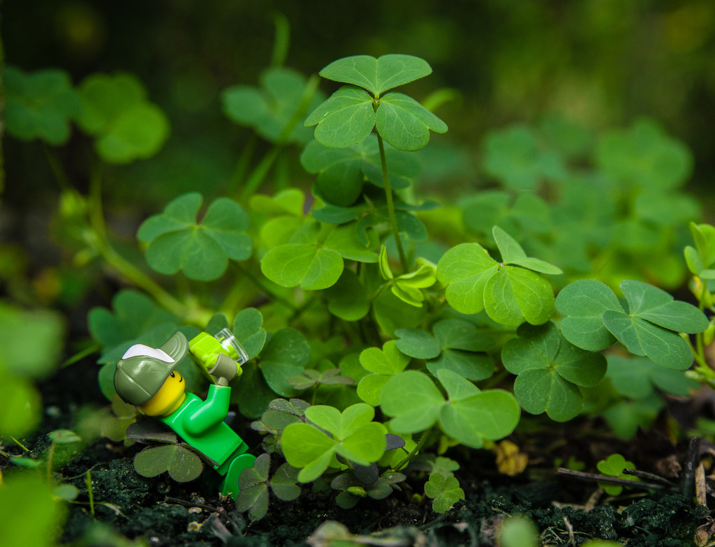 (Day 186) - Go Green! by cjphoto