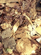 17th Aug 2019 - Wood Chips