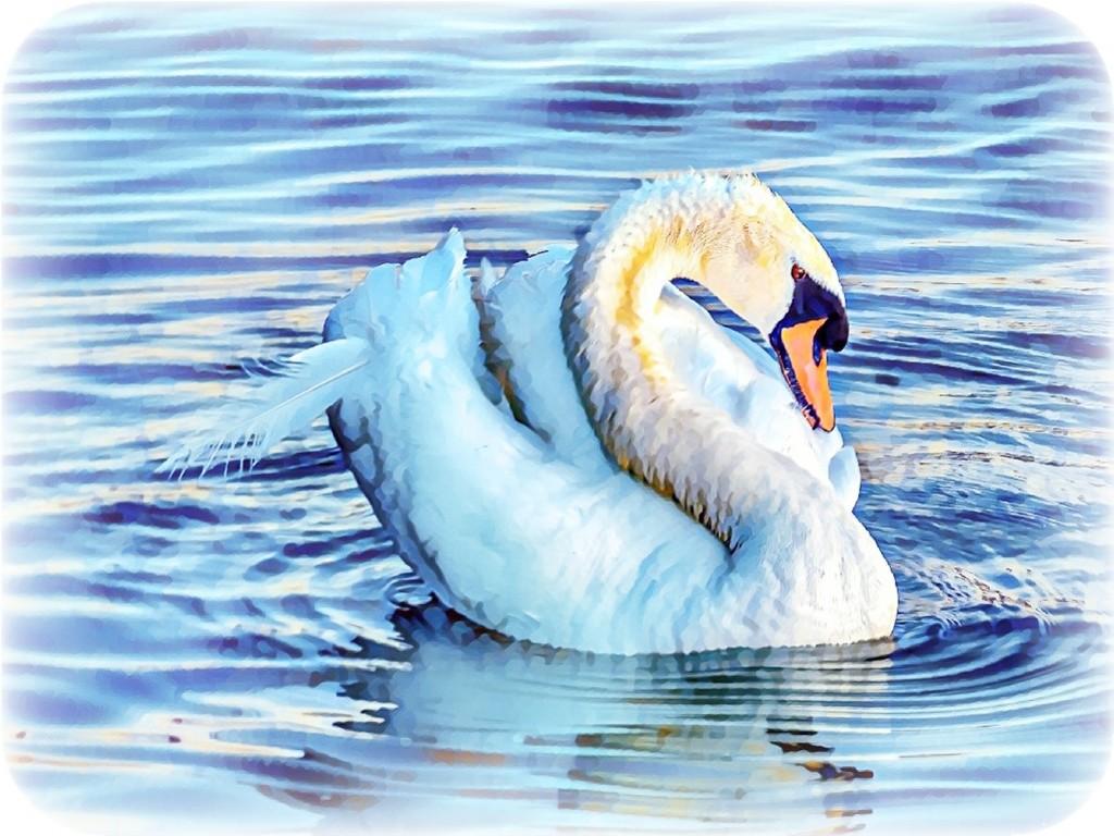 Preening Swan by ludwigsdiana