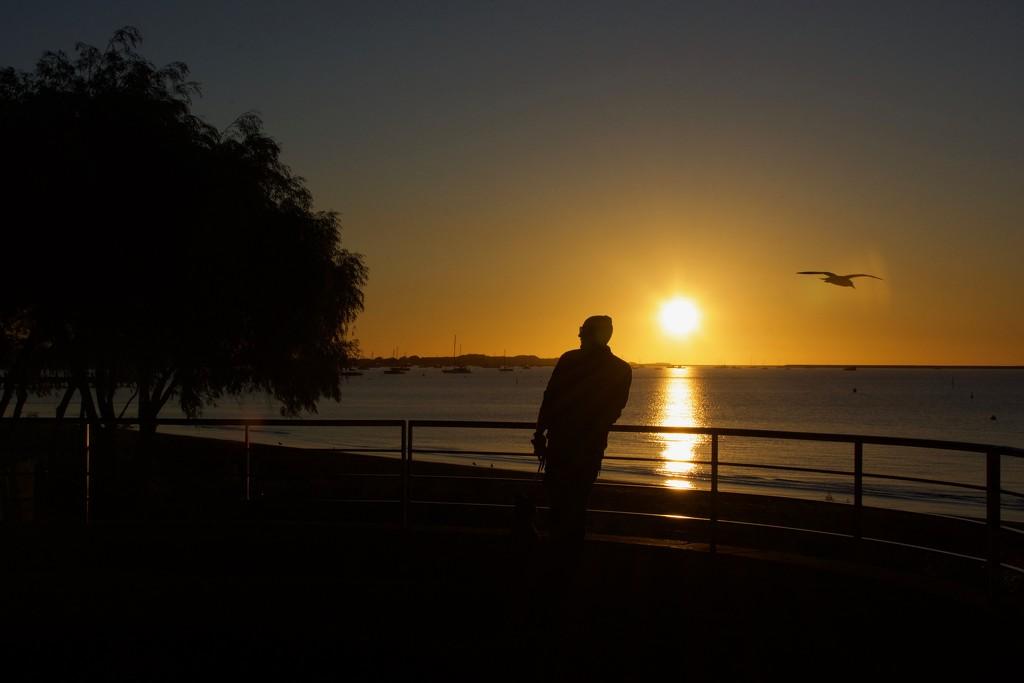 Sunset Silhouettes  DSC_5316 by merrelyn