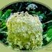 Mop Head Hydrangea