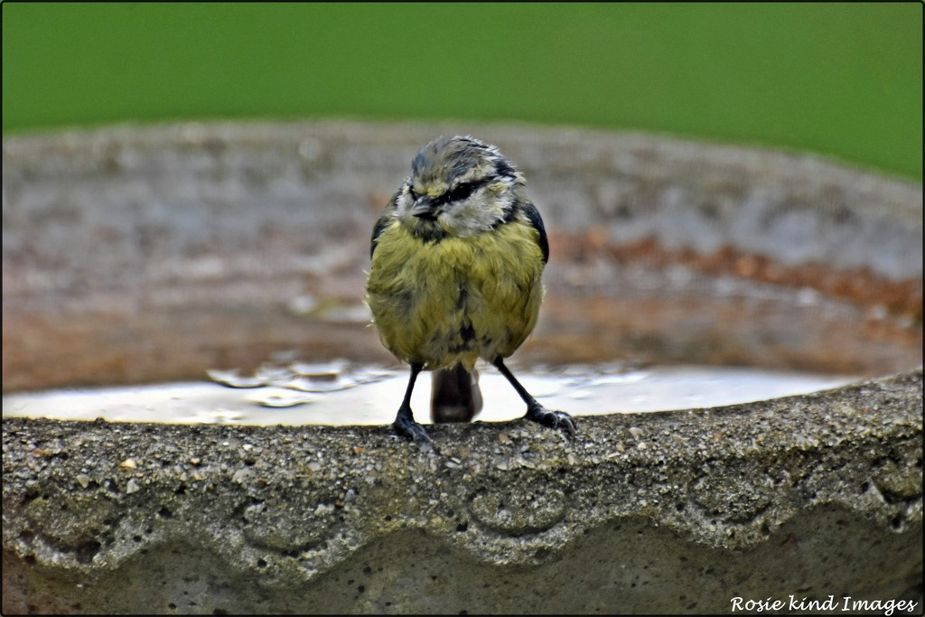 Can a little bird not have a bath in peace by rosiekind