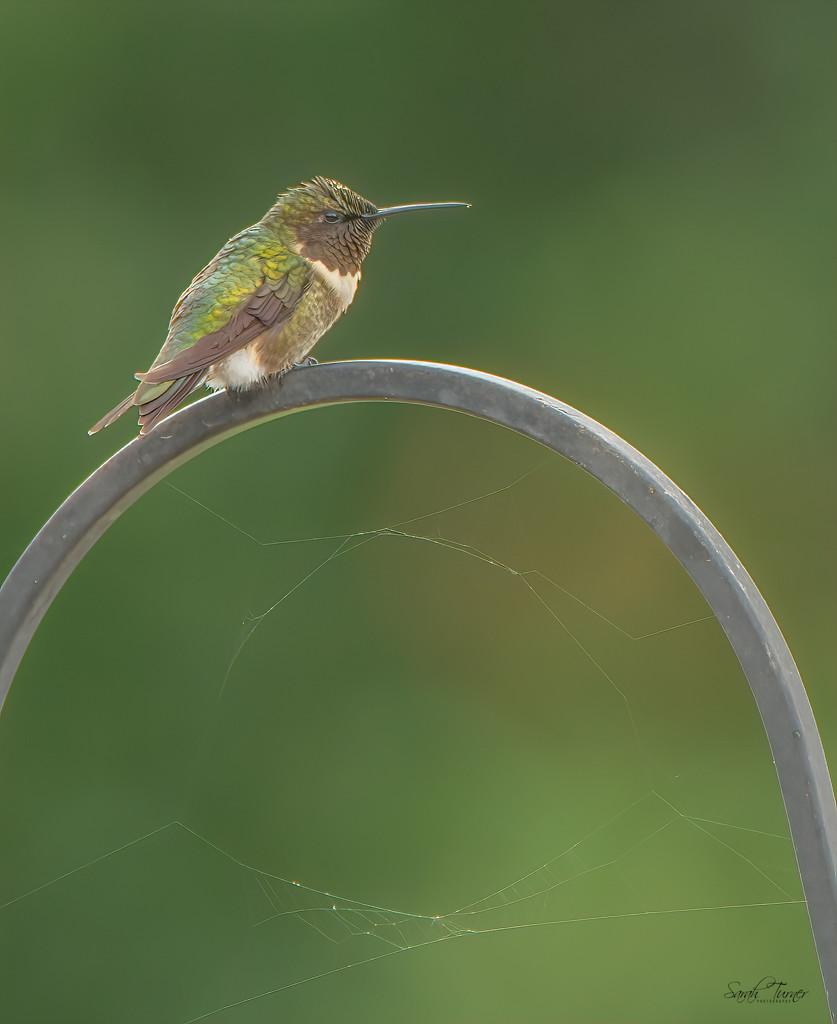 Grumpy Hummingbird Patrol by samae