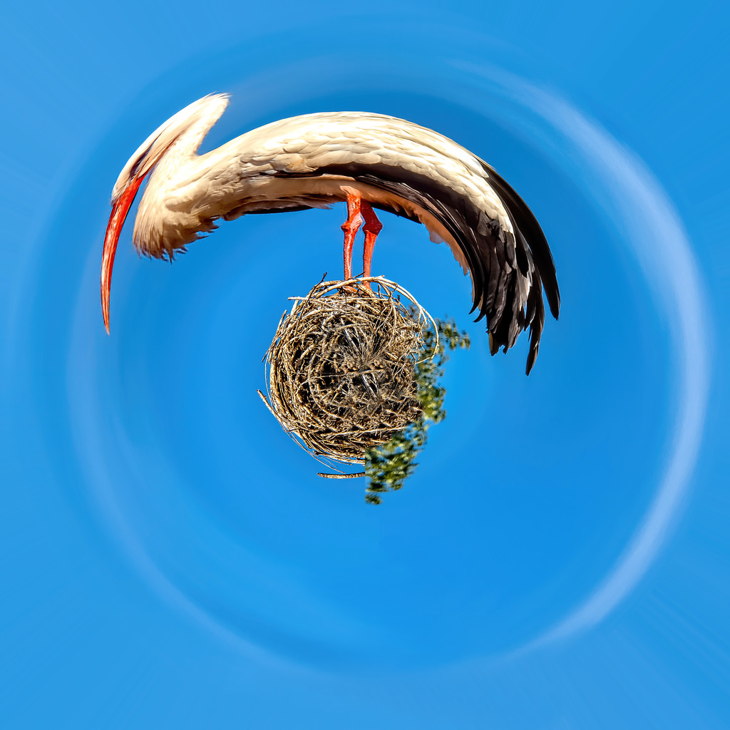 A Stork on his little planet by ludwigsdiana