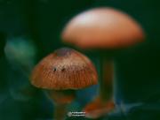 19th Aug 2019 - Magic Macro Mushrooms