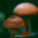 Magic Macro Mushrooms
