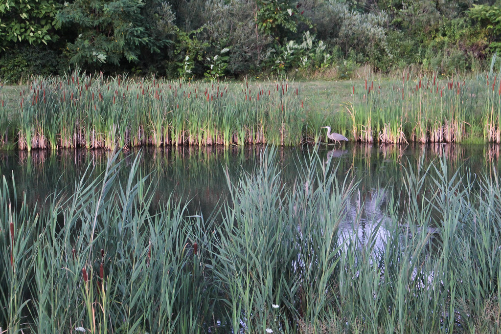 Pond and bird by mittens