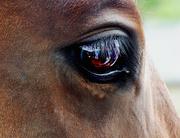 21st Aug 2019 - Horse's eye selfie