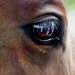 Horse's eye selfie by judithdeacon