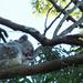 sweet sleep by koalagardens