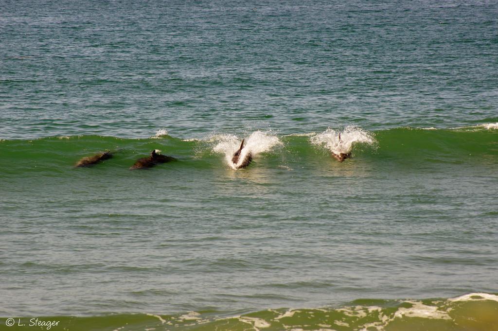 The orginal bodysurfers by larrysphotos