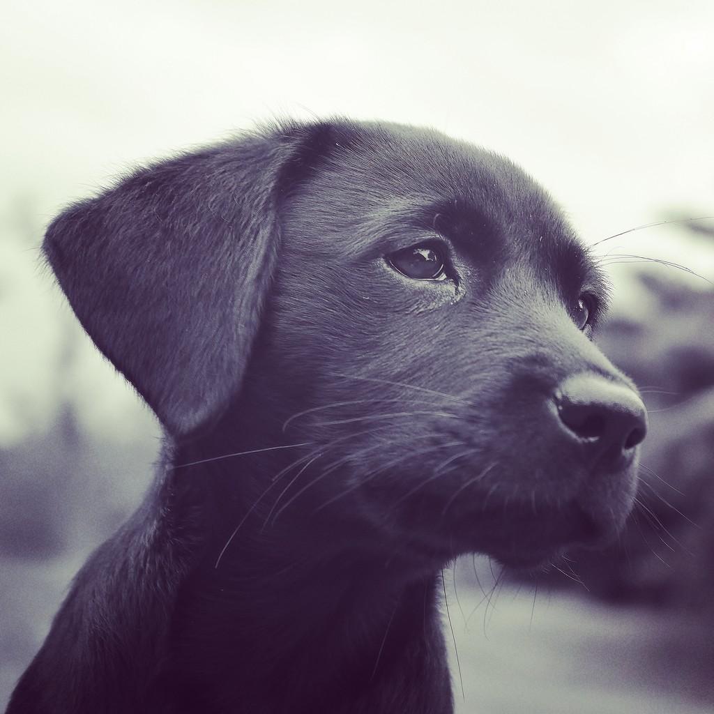 Puppy Love by motherjane