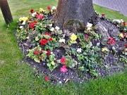 7th Aug 2019 - Flowers Around a Tree