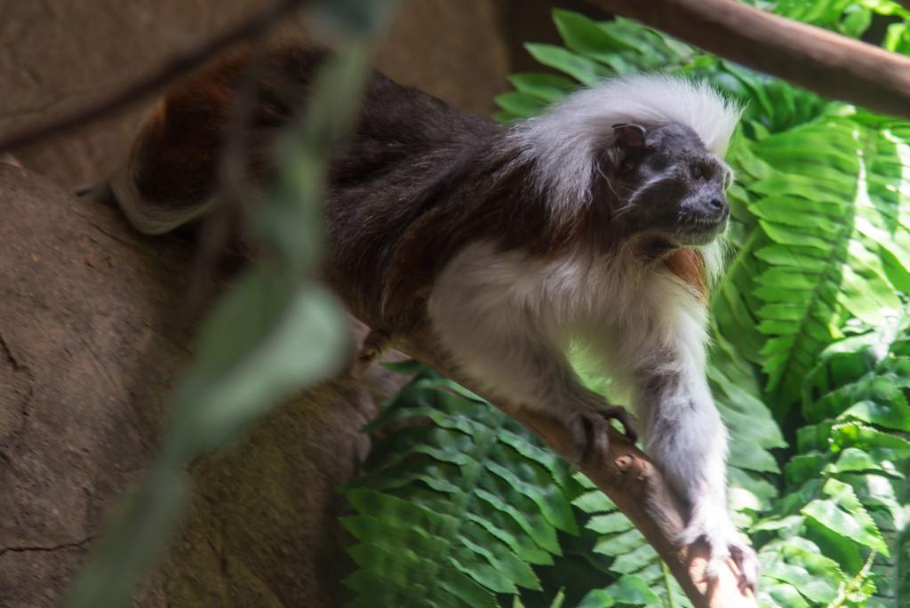 Monkey! by dianen