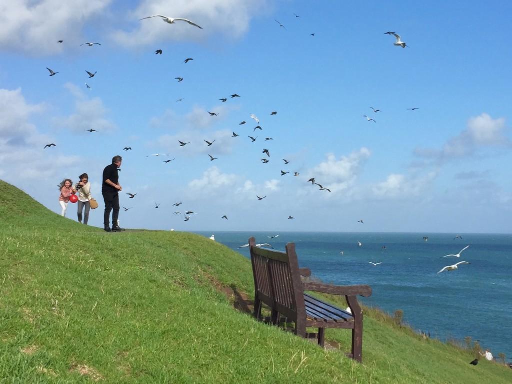 Birds!!!! by lilaclisa