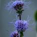 Purple Scraggly Flower