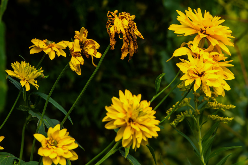 Yellow and Brown by farmreporter