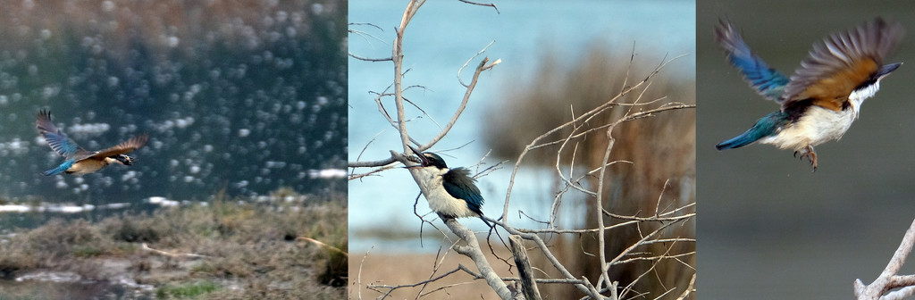 Three steps to kingfisher lunch by maureenpp