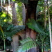 """Another  of my back yard """"Jungle"""" shots"""