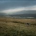Sheep on Corney Fell by ellida