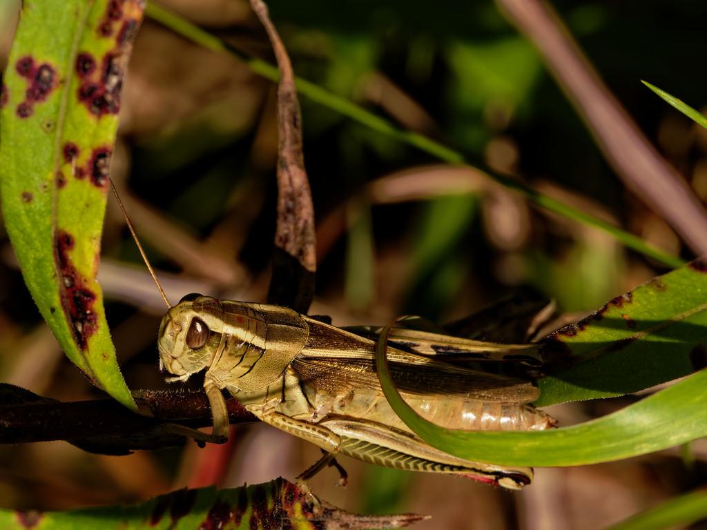 grasshopper by rminer