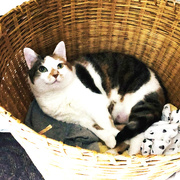 21st Aug 2019 - Pearl's In The Laundry Basket