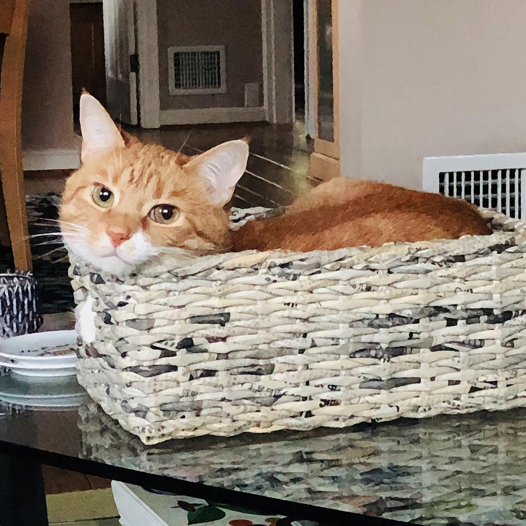 Honey's In Her Tiny Basket by yogiw