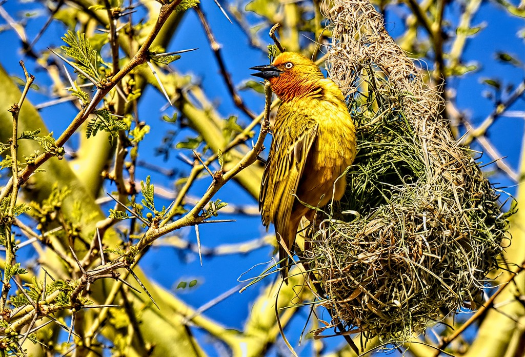 I don't want last years nest! by ludwigsdiana