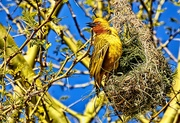 23rd Aug 2019 - I don't want last years nest!