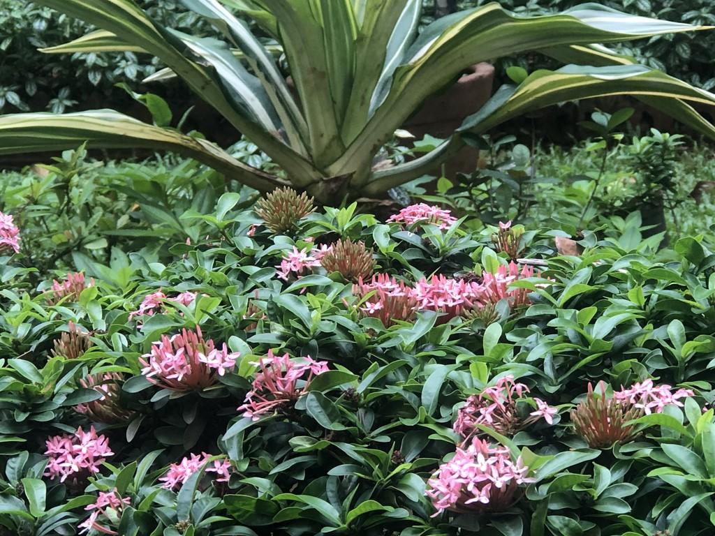 Roadside Plants by veengupta