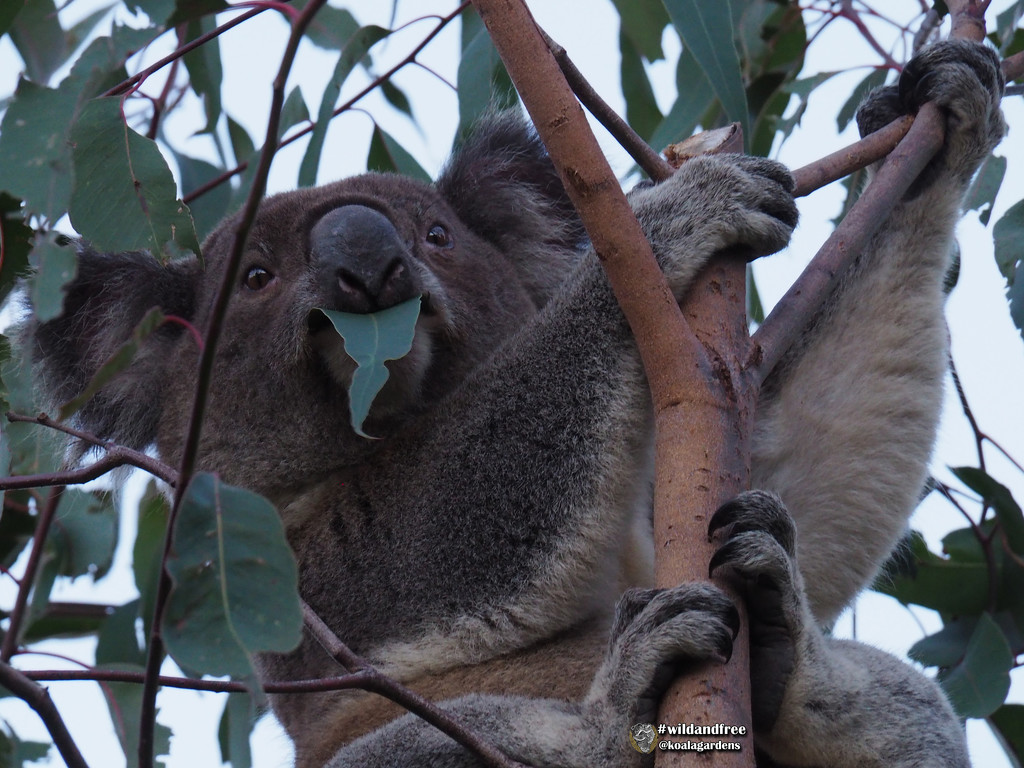 quality assurance tester on the job by koalagardens