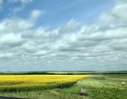 23rd Aug 2019 - South Dakota Sunflower Farm