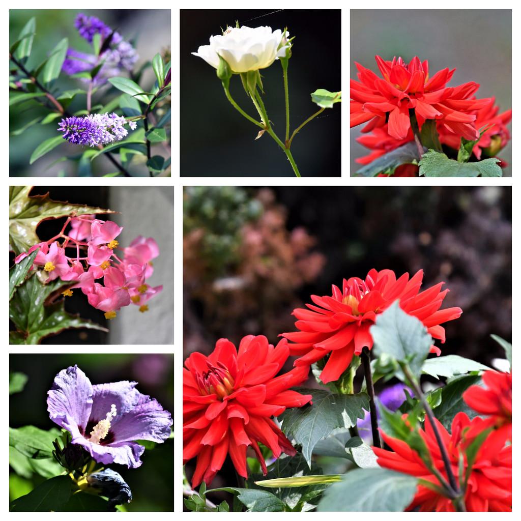 Garden flowers by rosiekind