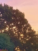 """24th Aug 2019 - """"Pink sky in the morning"""""""