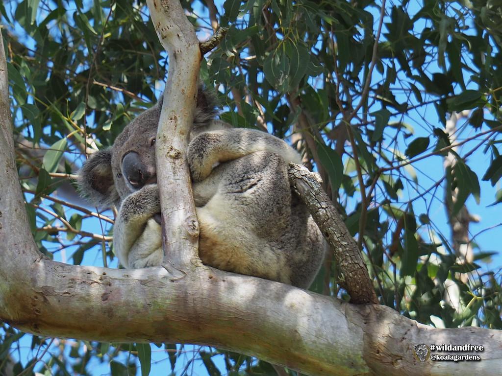 tucked up by koalagardens