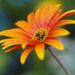 daisy macro by koalagardens