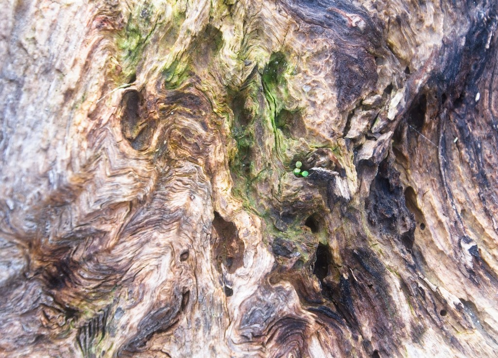Textured growth by kiwinanna