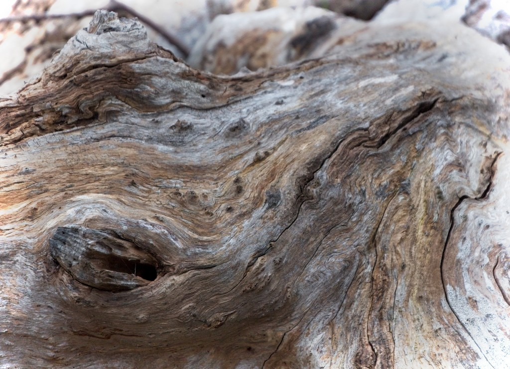 Barking mad for driftwood abstracts by kiwinanna