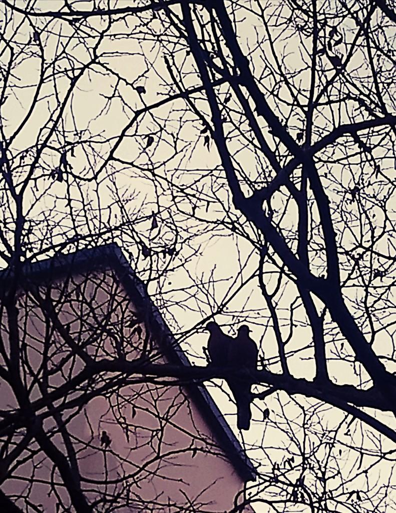 Love doves by ulla