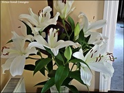 25th Aug 2019 - Lilies in my hall