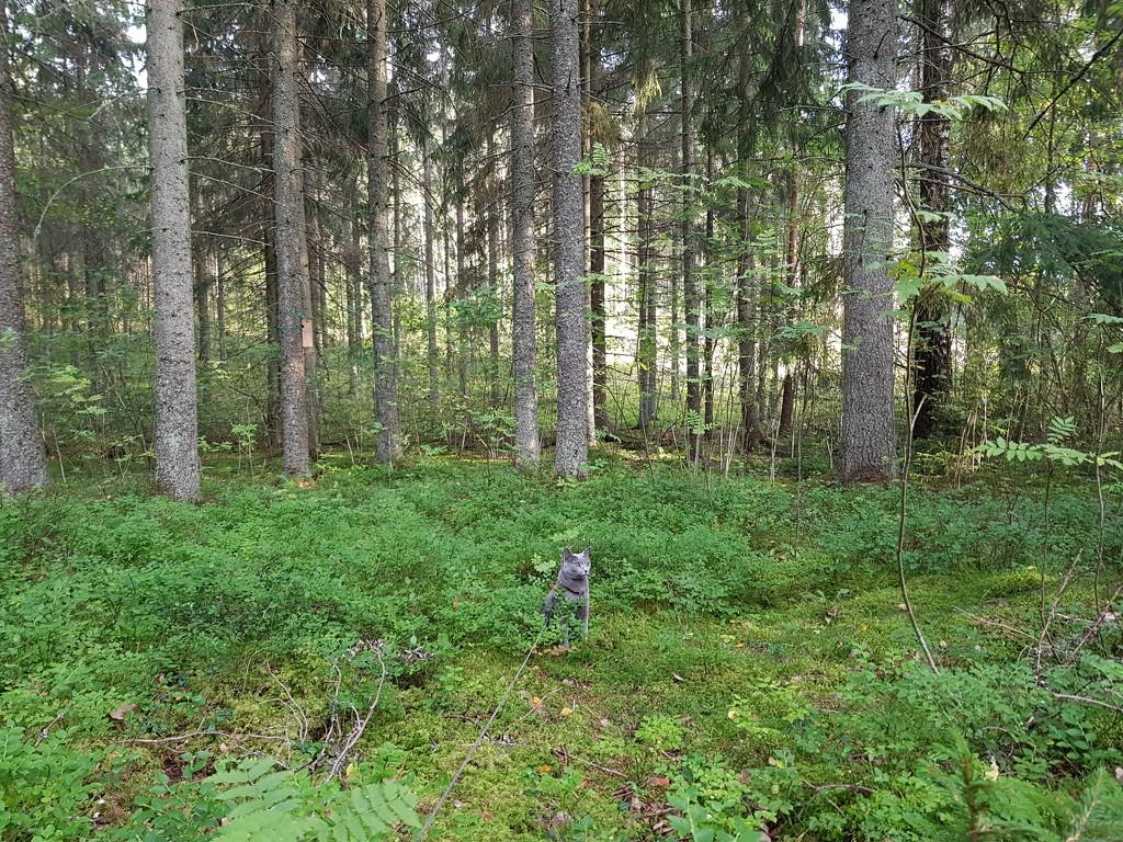 Small cat, big forest by katriak