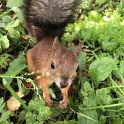 25th Aug 2019 - Watch out, squirrels!
