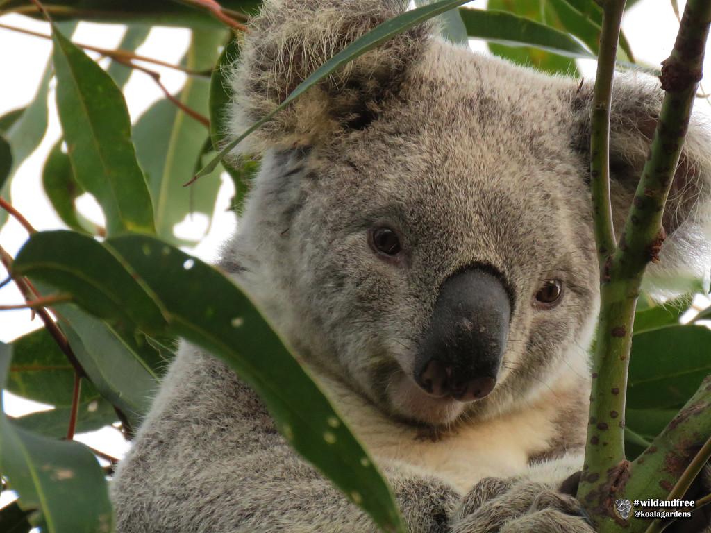Howzat! by koalagardens