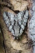 25th Aug 2019 - Moth?  What Moth?