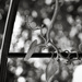 Tendrils... and bokeh! by vignouse