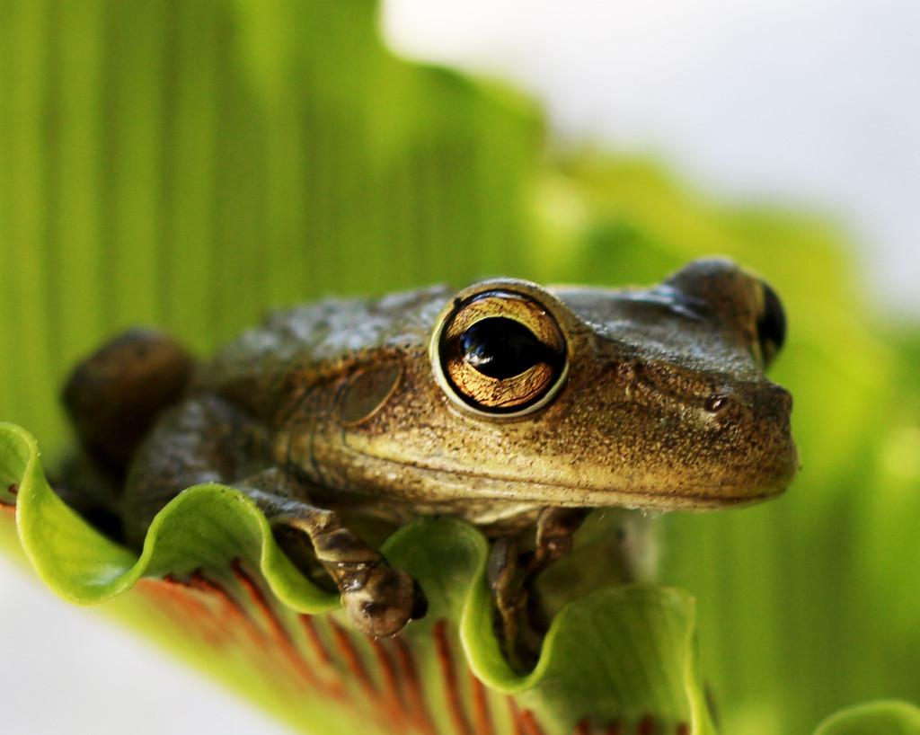 Frog in Fern by hondo