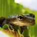 Frog in Fern