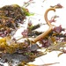 Seaweed Corkscrew