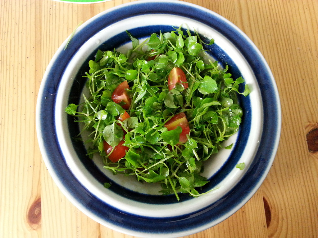 Chickweed salad by annelis